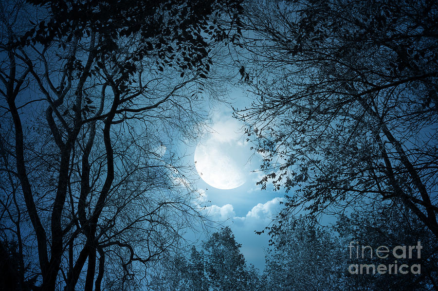 Moonlight With Forest Photograph  - Moonlight With Forest Fine Art Print