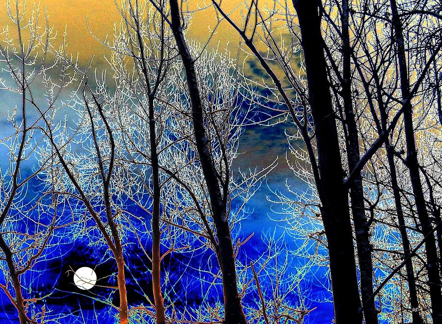 Moonlit Frosty Limbs Digital Art  - Moonlit Frosty Limbs Fine Art Print