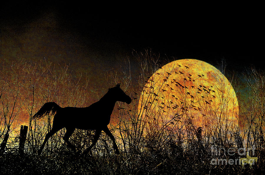 Moonrise Trot Photograph