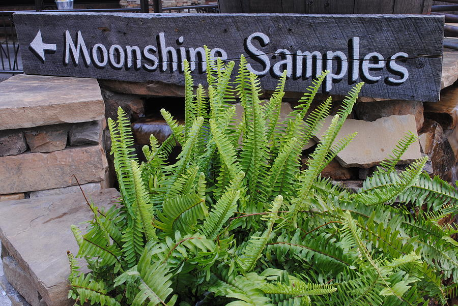 Moonshine Photograph  - Moonshine Fine Art Print