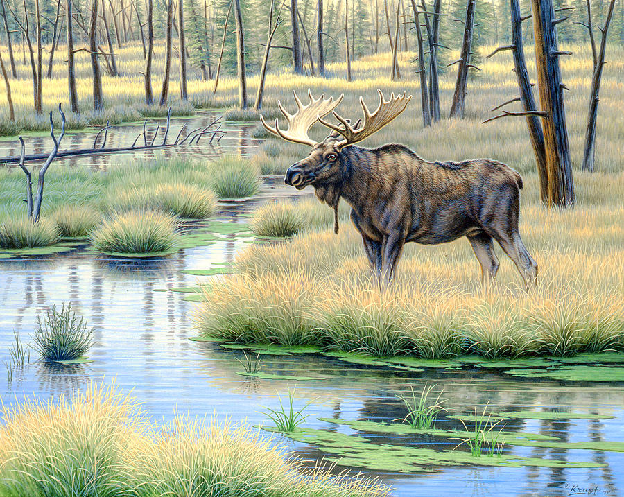 Moose Country Painting