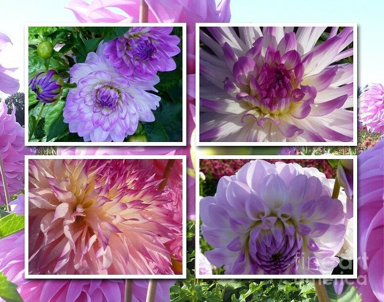 Flowers Photograph - More Dahlias by Susan Garren
