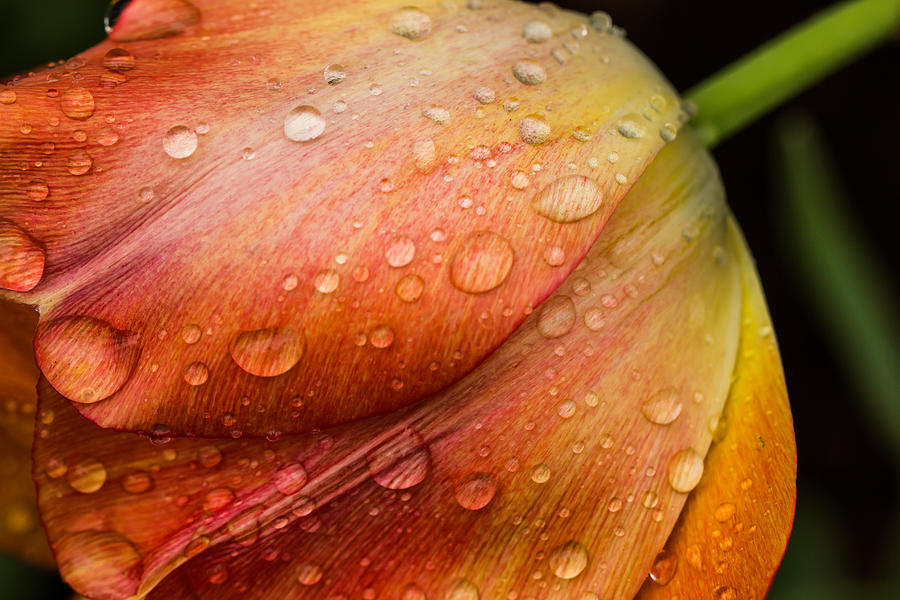 Morning Dew Photograph  - Morning Dew Fine Art Print