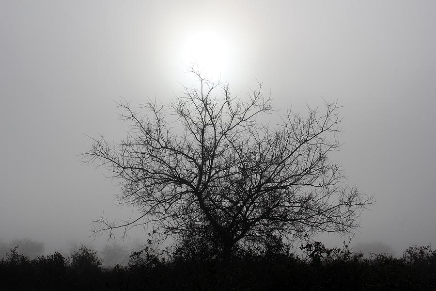 Morning Fog Photograph