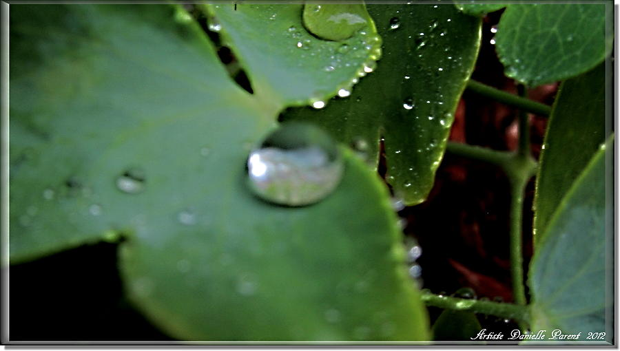 Morning Fresh Leaves With Droplets Photograph  - Morning Fresh Leaves With Droplets Fine Art Print
