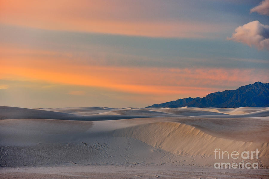Morning Glory In White Sands Photograph