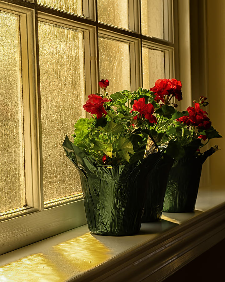 Flowers Photograph - Morning Glow by Boyd Alexander