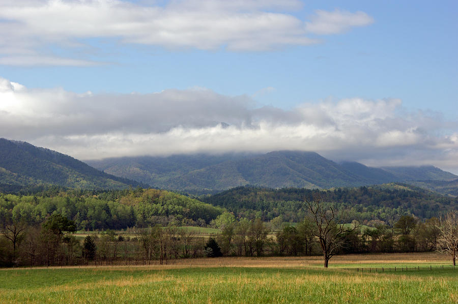 Morning In Cades Cove Photograph