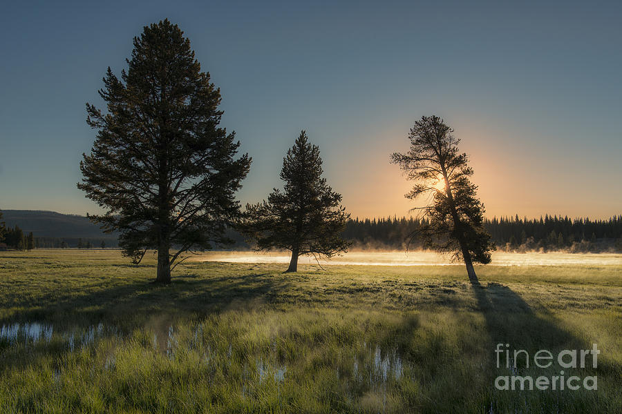 Morning Light In Yellowstone Photograph  - Morning Light In Yellowstone Fine Art Print