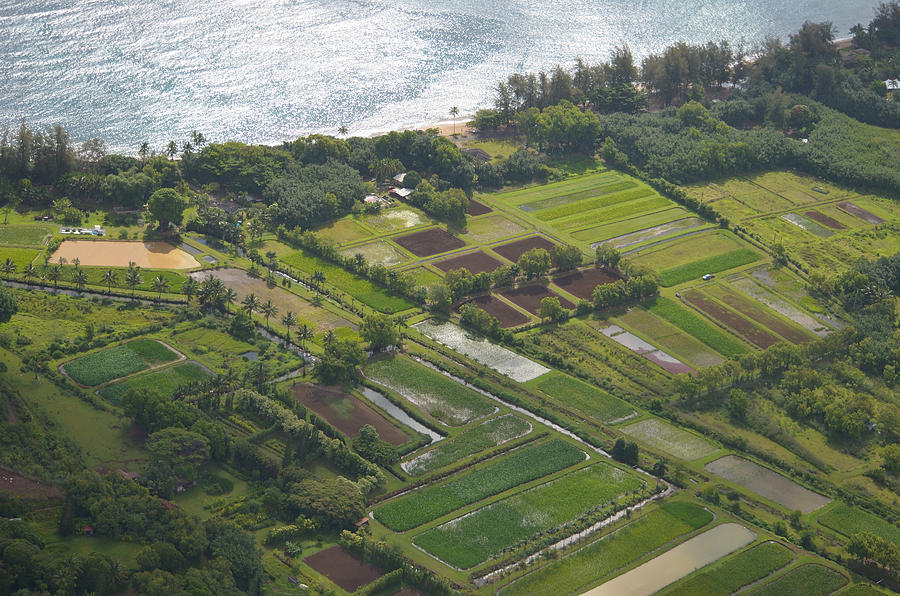 Aerial Photograph Photograph - Morning Light Over Kauai Taro Fields by Kai Hyde