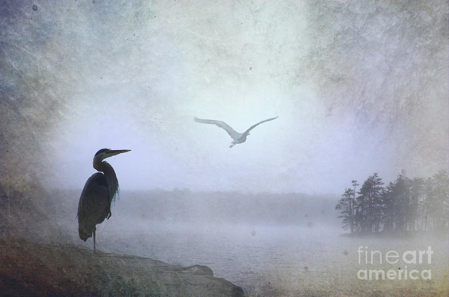 Morning Mist Along The Masagee Photograph  - Morning Mist Along The Masagee Fine Art Print