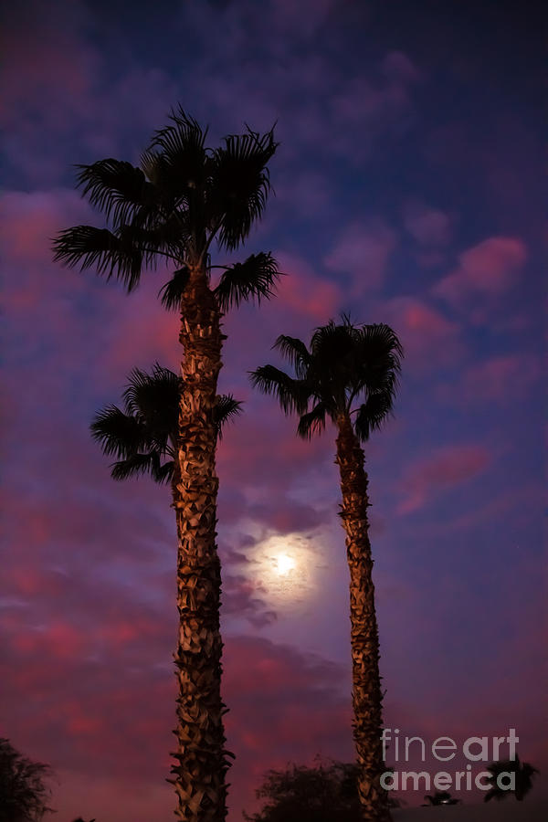 Morning Moon Photograph  - Morning Moon Fine Art Print