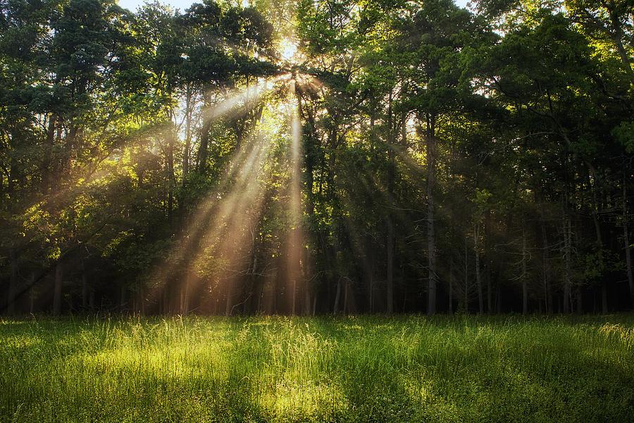 Light Photograph - Morning Radiance by Andrew Soundarajan