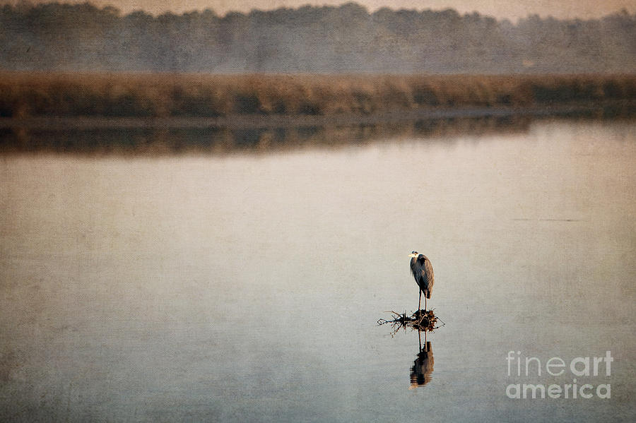 Morning Solitude Photograph  - Morning Solitude Fine Art Print