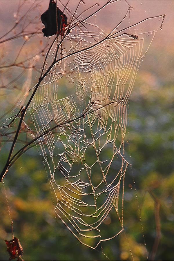 - morning-web-phillip-price