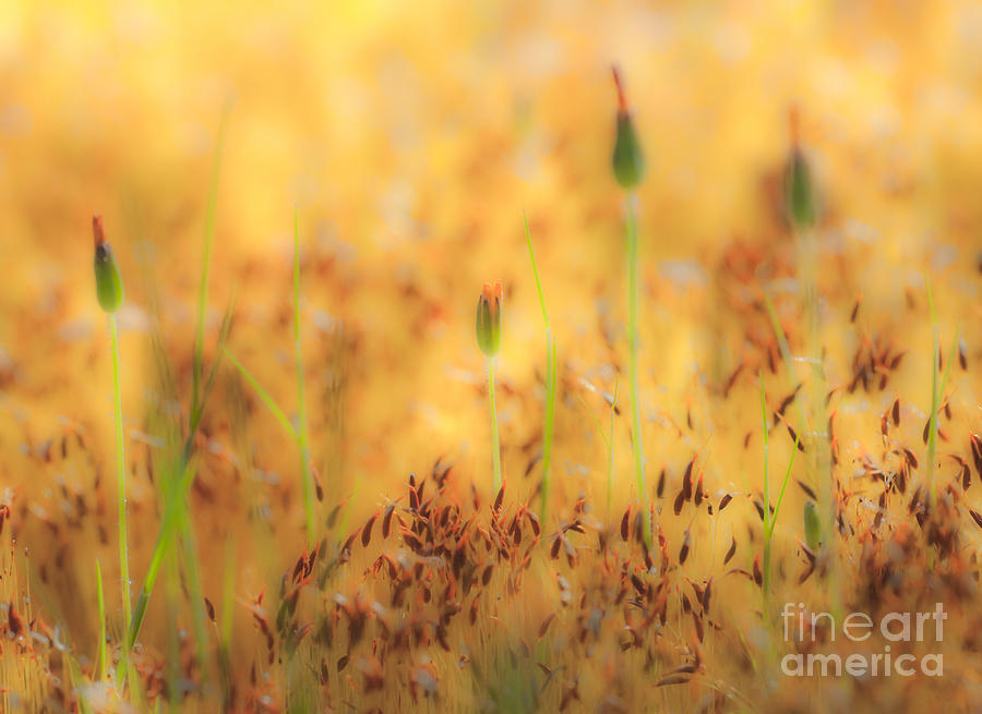 Moss And Flowers - Greensboro North Carolina Photograph  - Moss And Flowers - Greensboro North Carolina Fine Art Print