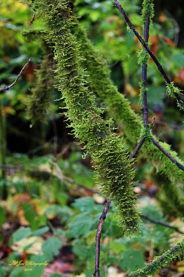 Moss Beauty Photograph  - Moss Beauty Fine Art Print