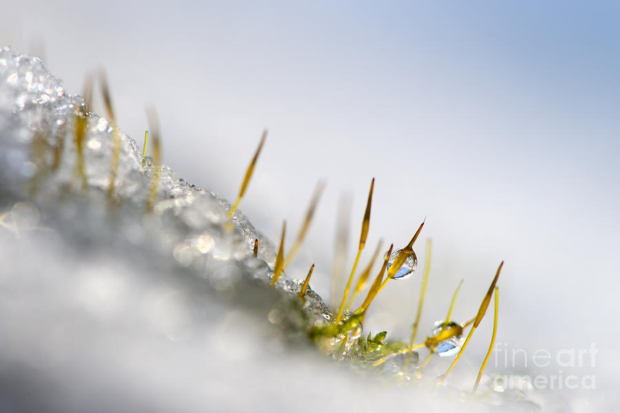 Moss Photograph  - Moss Fine Art Print
