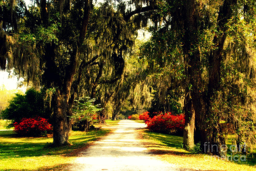 Moss On The Trees At Monks Corner In Charleston Photograph