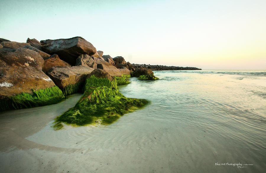 Mossy Lagoon Photograph