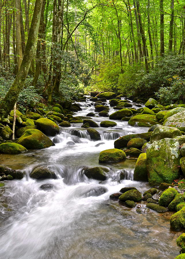 Mossy Mountain Stream Photograph  - Mossy Mountain Stream Fine Art Print