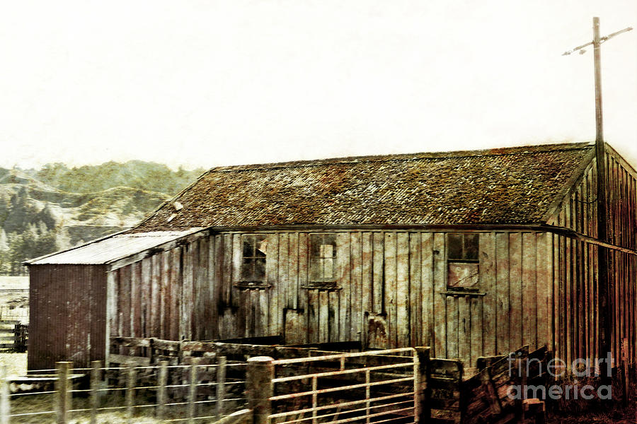 Old Shed Photograph - Mossy Shed by Linde Townsend