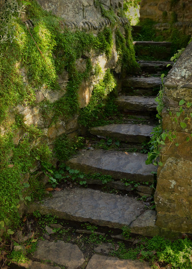 Mossy Steps Photograph