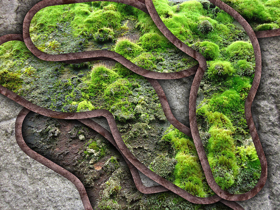 Approximation Photograph - Mossy System by Florin Birjoveanu