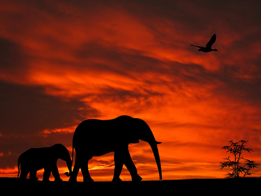 Mother And Baby Elephants Sunset Silhouette Series