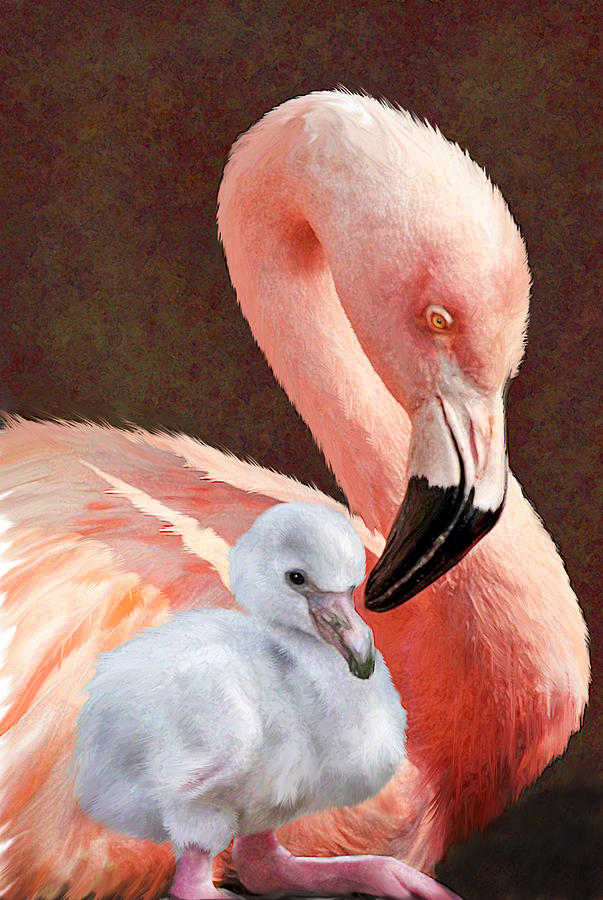 Mother And Baby Flamingo Digital Art
