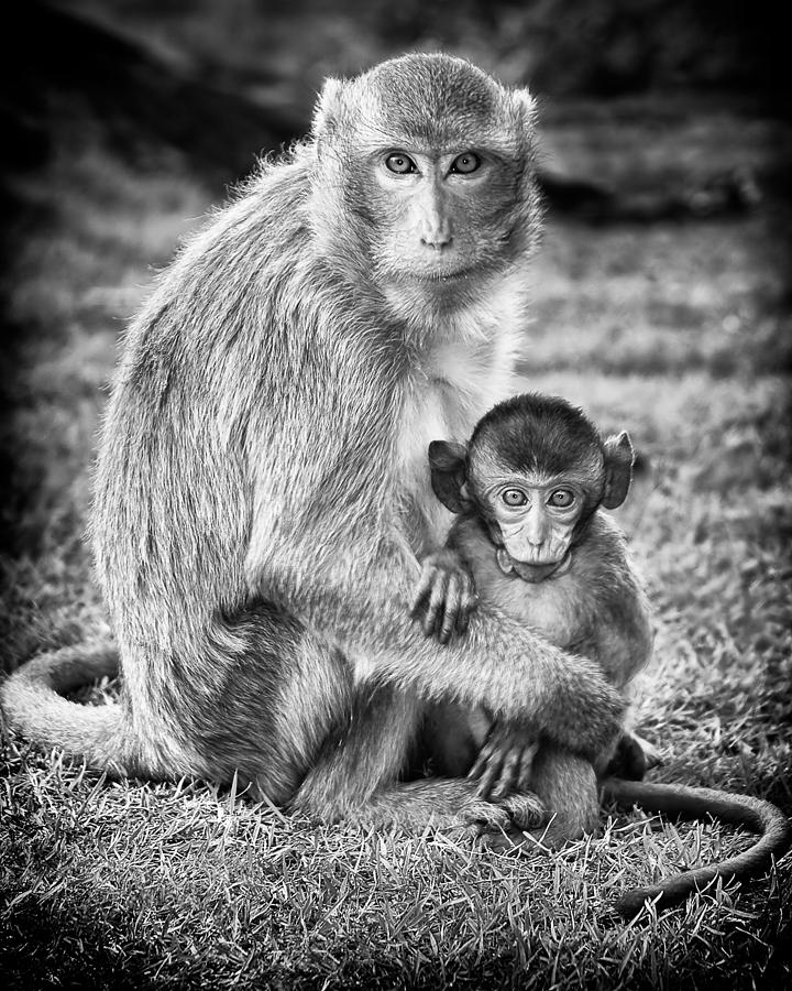 Mother And Baby Monkey Black And White Photograph