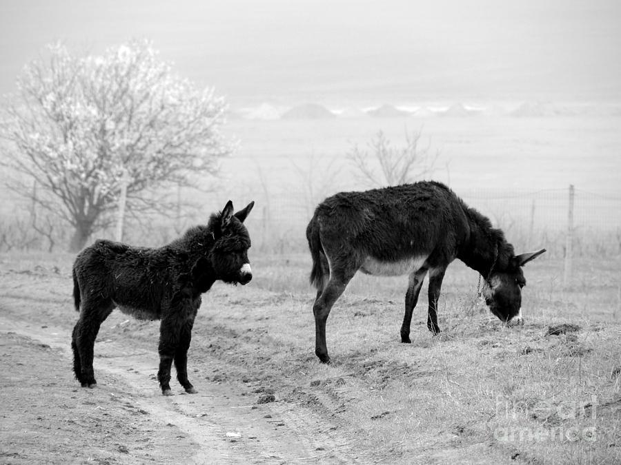 Donkey Photograph - Mother And Child by Gabriela Insuratelu