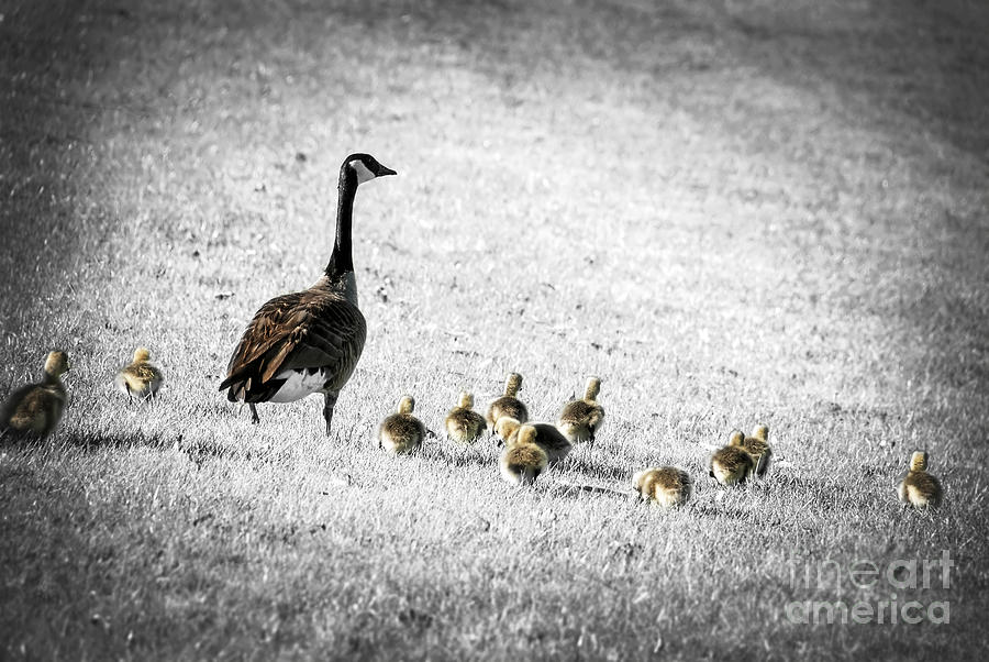 Mother Goose Photograph  - Mother Goose Fine Art Print