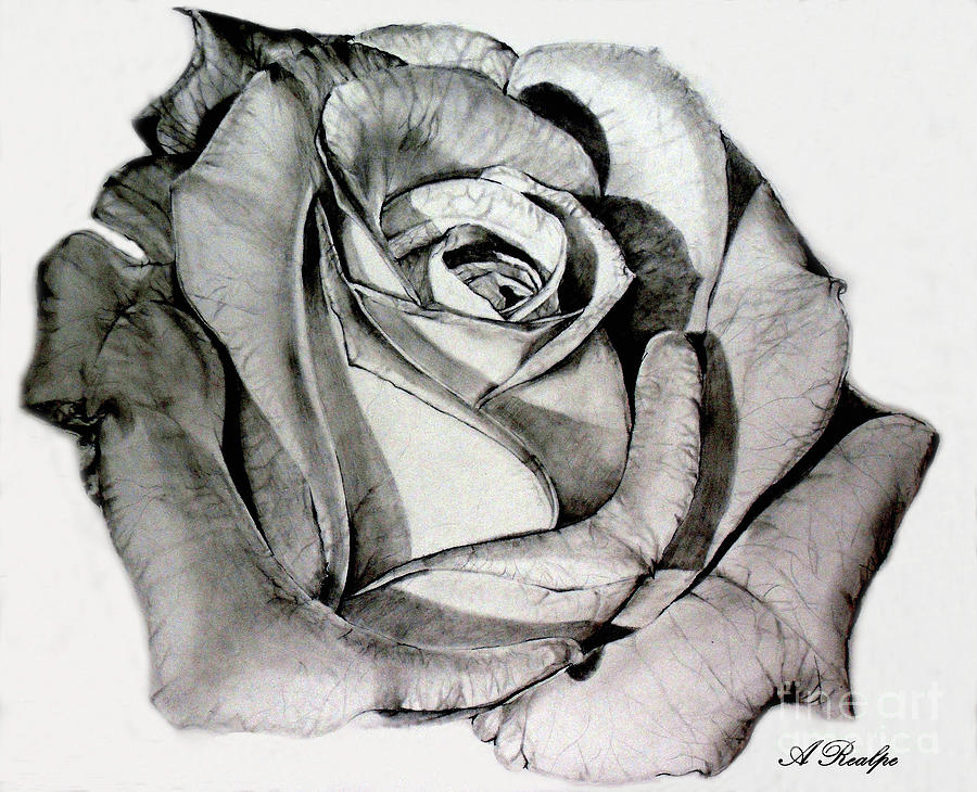 Mother Rose Drawing by Andrea Realpe