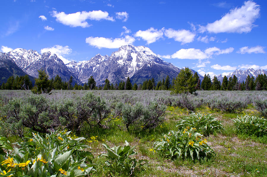 Mount Moran Wildflowers Photograph