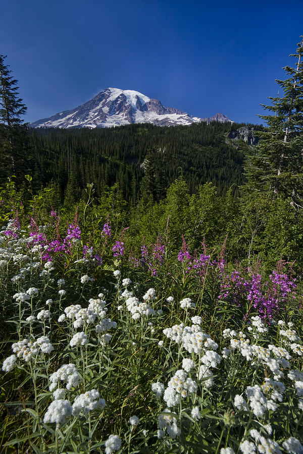 Mount Rainier Photograph  - Mount Rainier Fine Art Print