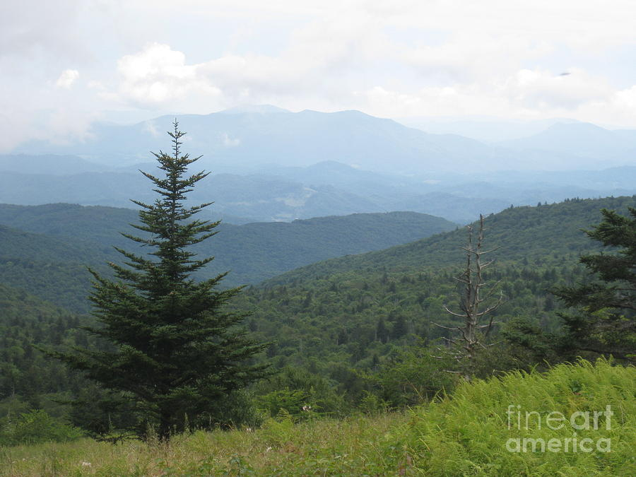 Mount Rogers National Scenic Area Photograph