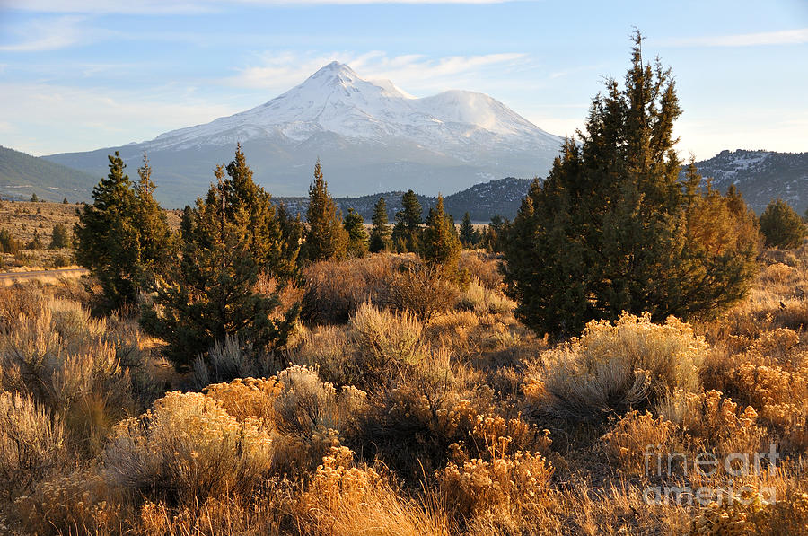 Mount Shasta In The Fall  Photograph  - Mount Shasta In The Fall  Fine Art Print