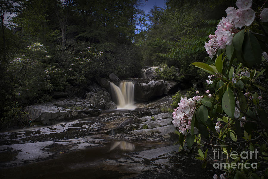 Mountain Laurel And Falls On Small Stream Photograph