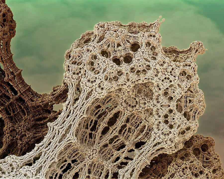 Mud Hive Photograph