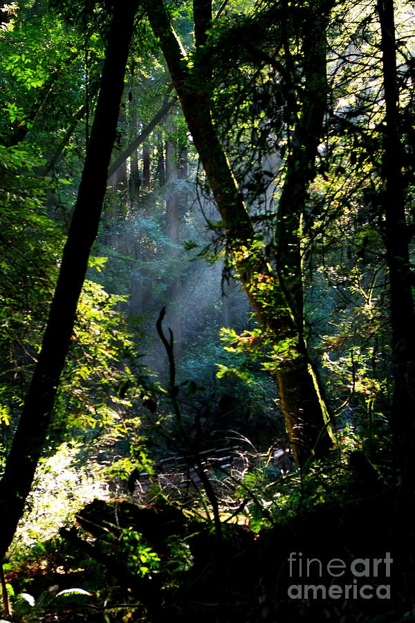 California Photograph - Muir Woods by Aidan Moran