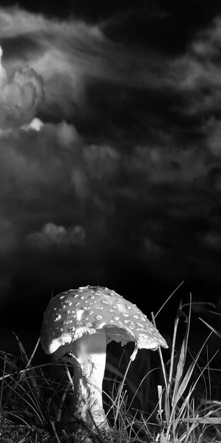 Mushrooms Photograph - Mushroom by Bob Orsillo