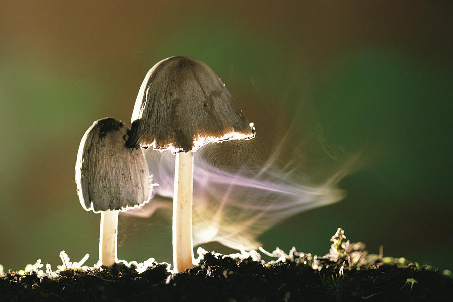 The Microbial Blogosphere Fungus Is Among Usand Making It Rain