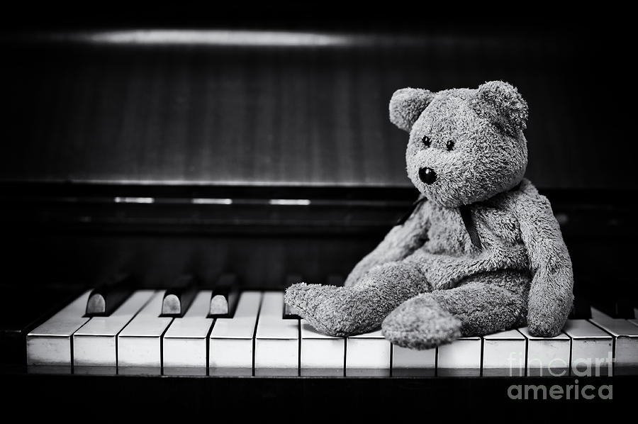 Musical Bear Photograph
