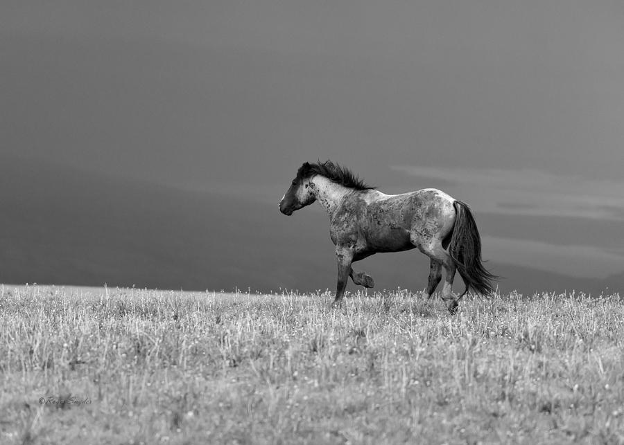 Beautiful Photograph - Mustang 2 Bw by Roger Snyder