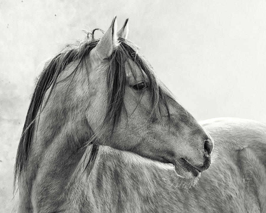 Equine Photograph - Mustang by Ron  McGinnis