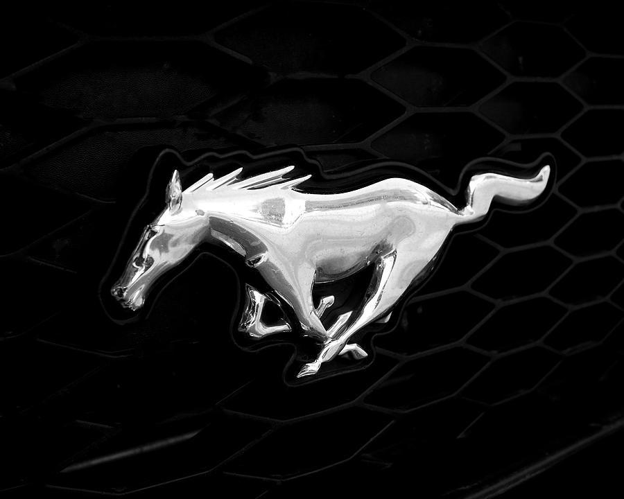 Mustang Photograph