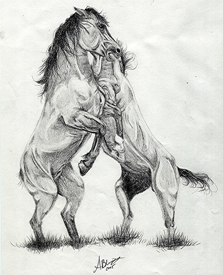 Mustang Stallions Wild Horses Drawing by Olde Time Mercantile