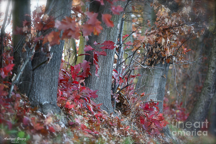 Landscape Prints  Photograph - My Autumn Nostalgia. by  Andrzej Goszcz