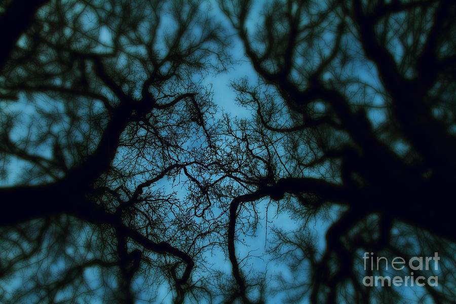 My Blue Dark Forest Photograph